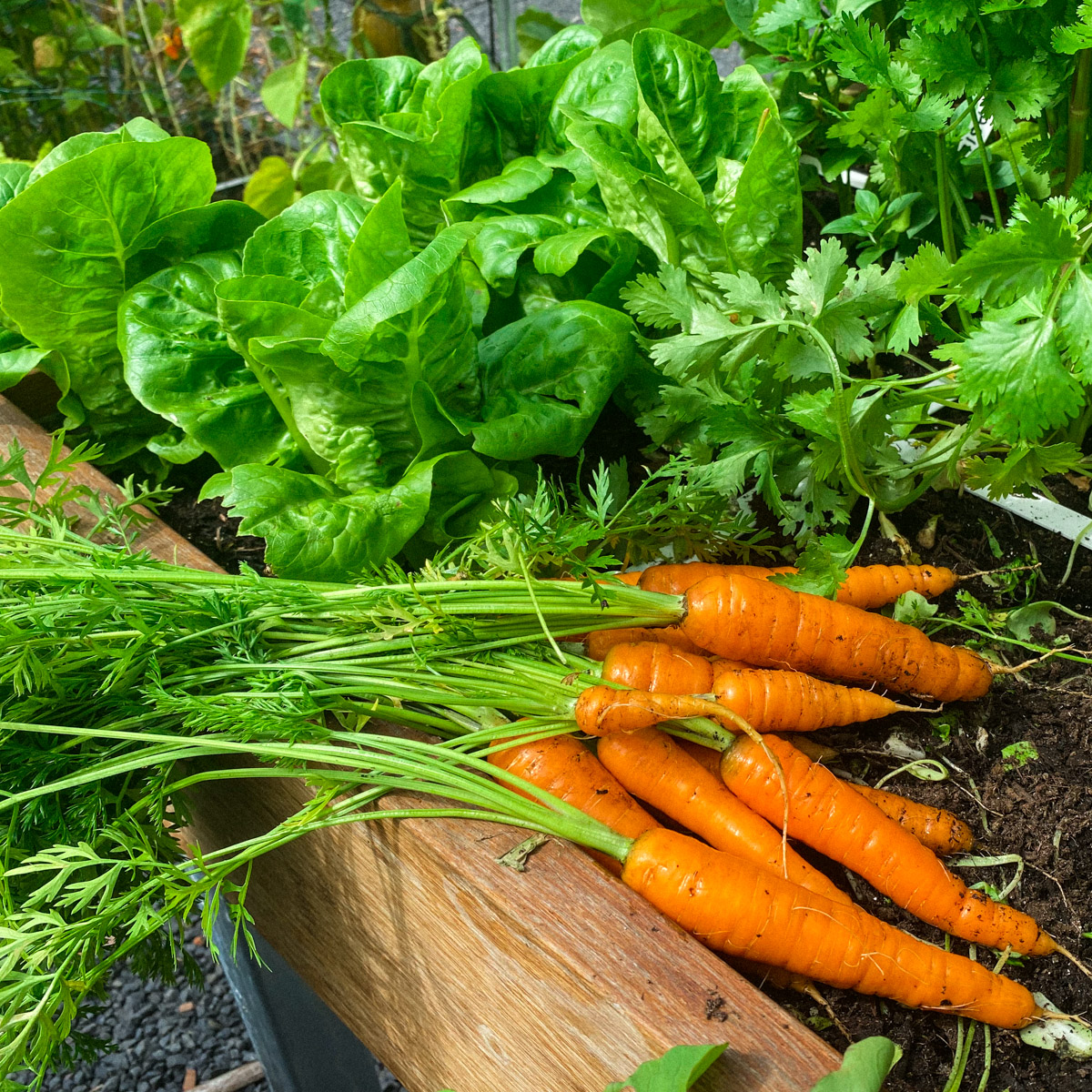blog-1-sept-2021-tour-of-the-planty-garden9.jpg