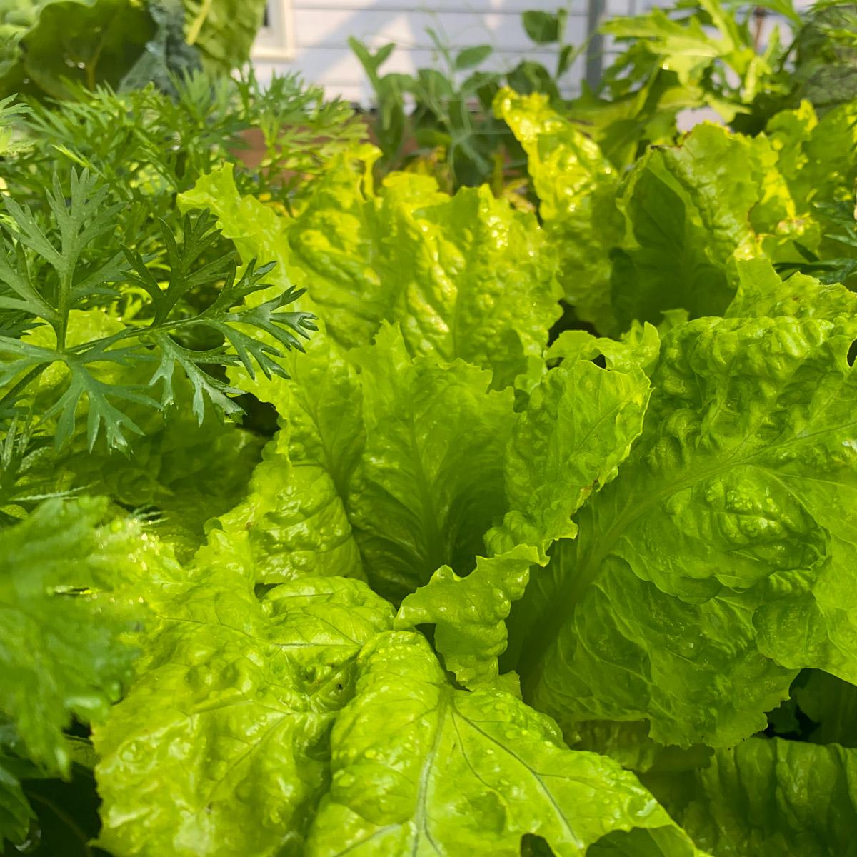 blog-1-sept-2021-tour-of-the-planty-garden15.jpg