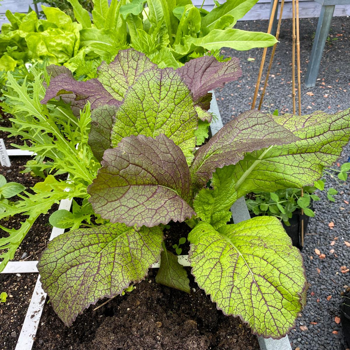 blog-1-sept-2021-tour-of-the-planty-garden2.jpg