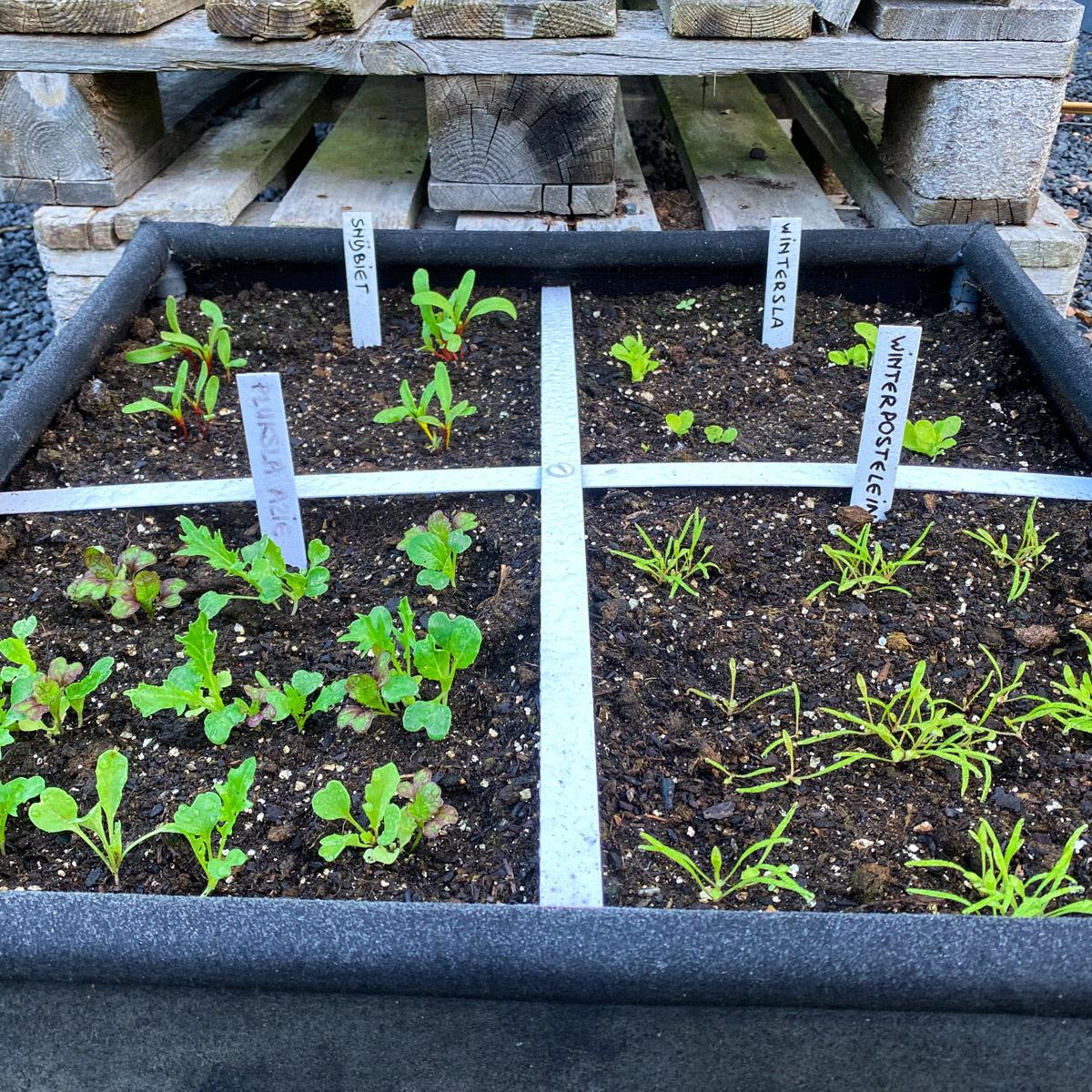 blog-1-sept-2021-tour-of-the-planty-garden1.jpg