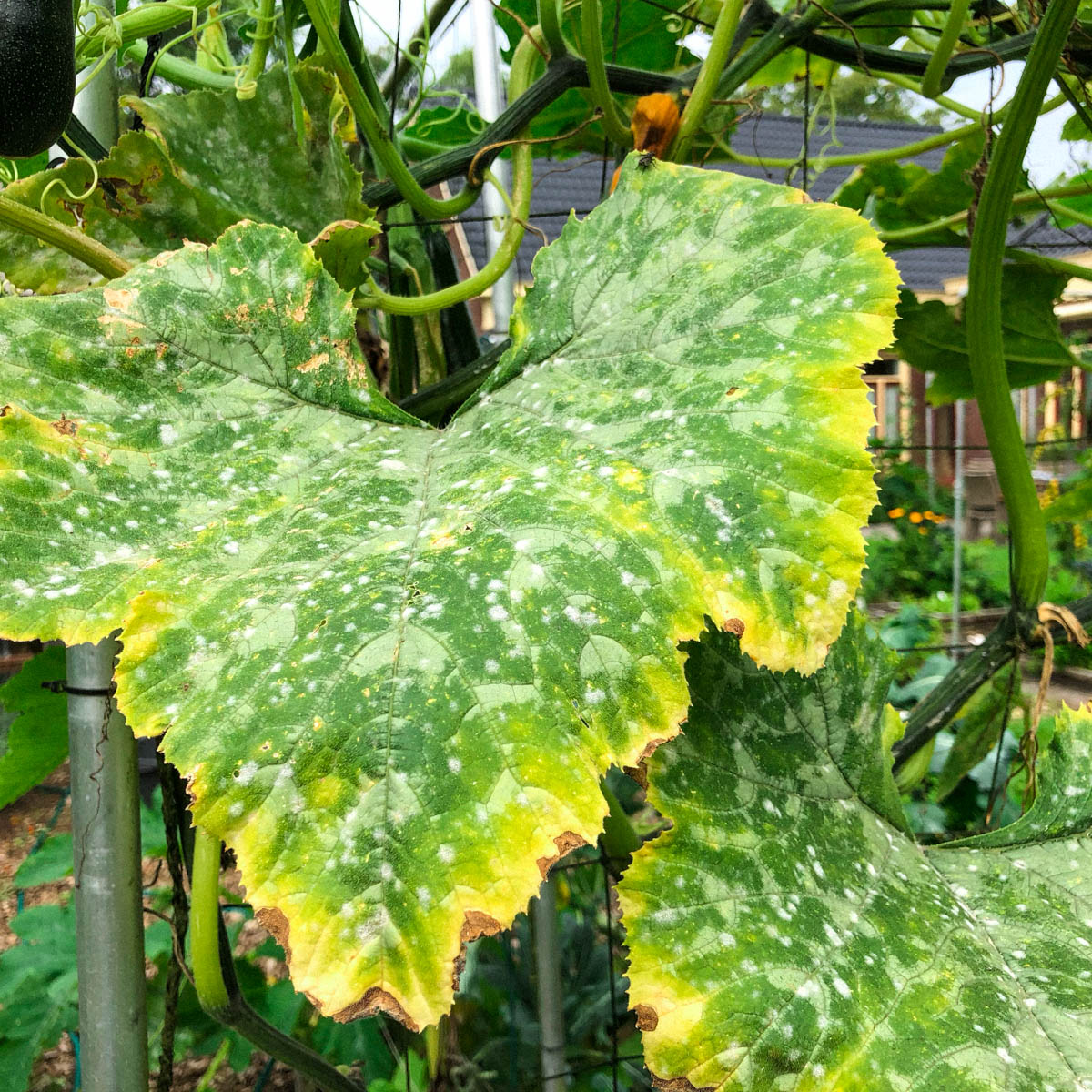 How-to-recognize-and-stop-mildew5.jpg