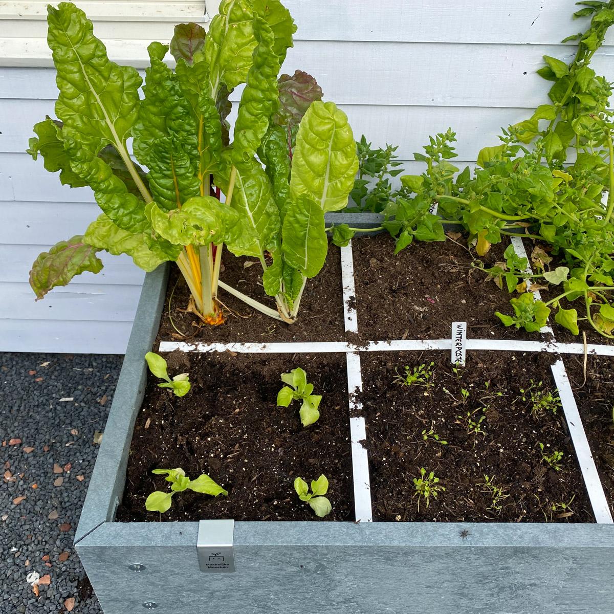 Seasonal-content_-Sept-in-the-planty-garden4.jpg