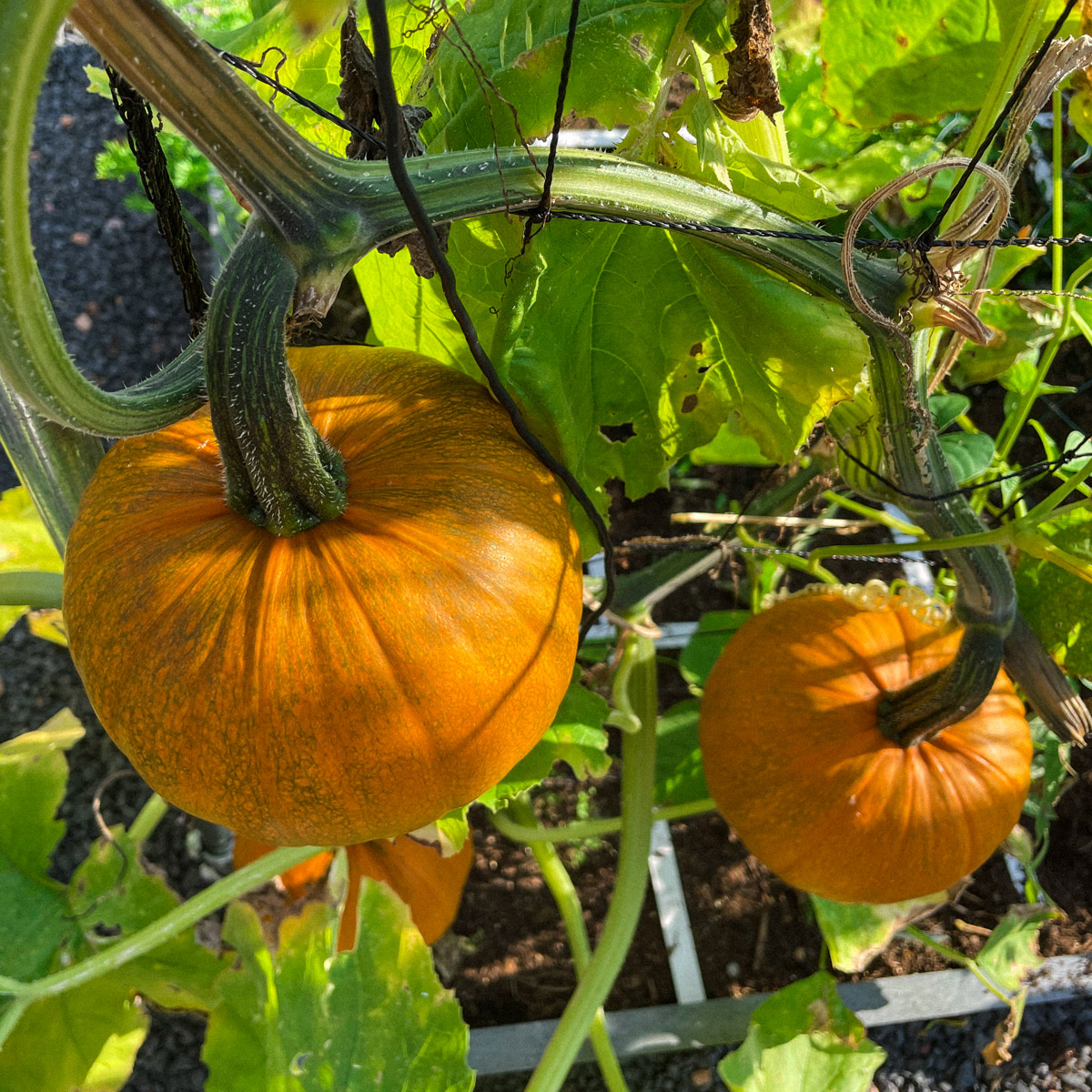 Seasonal-content_-Sept-in-the-planty-garden1.jpg
