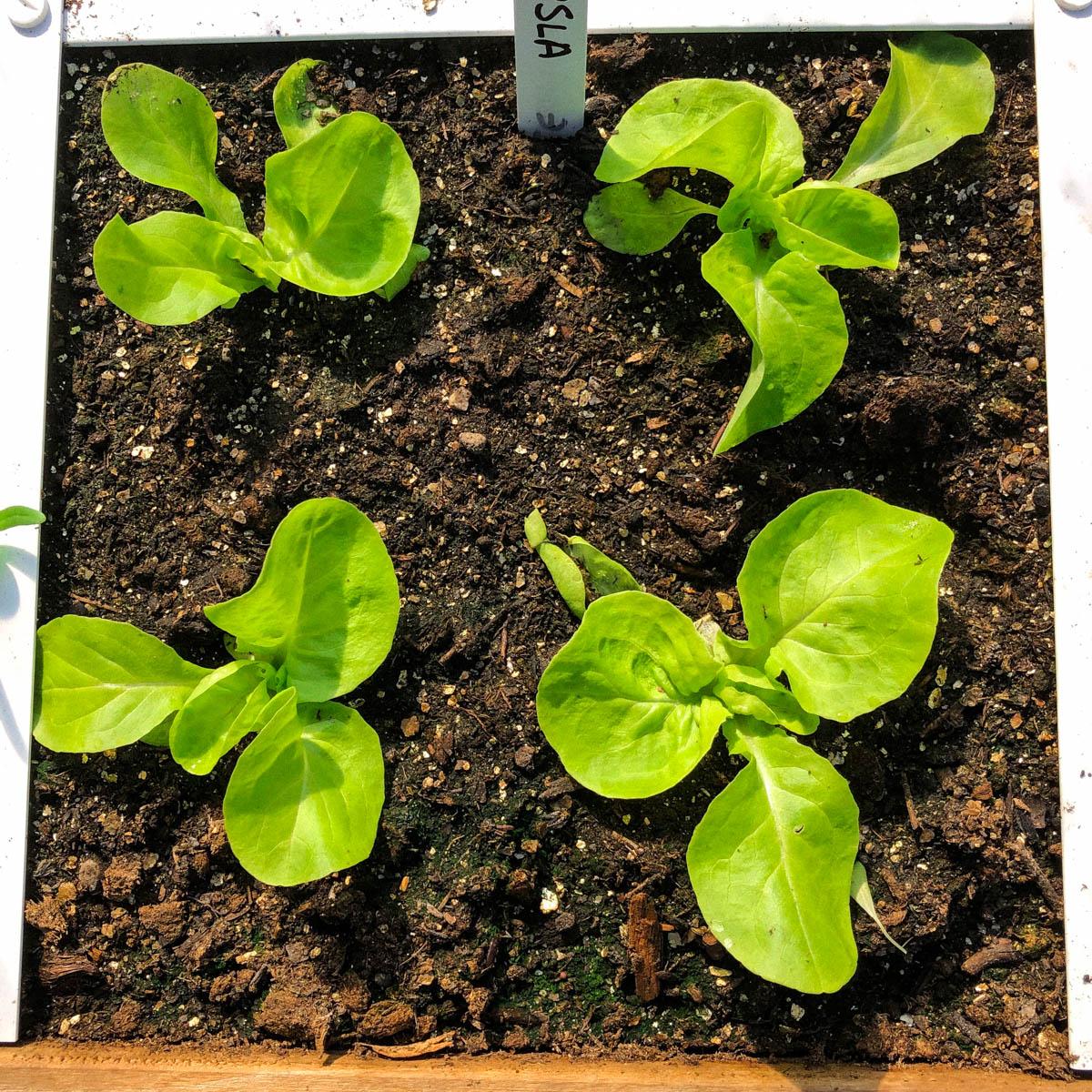 blog-1-sept-2021-tour-of-the-planty-garden26.jpg
