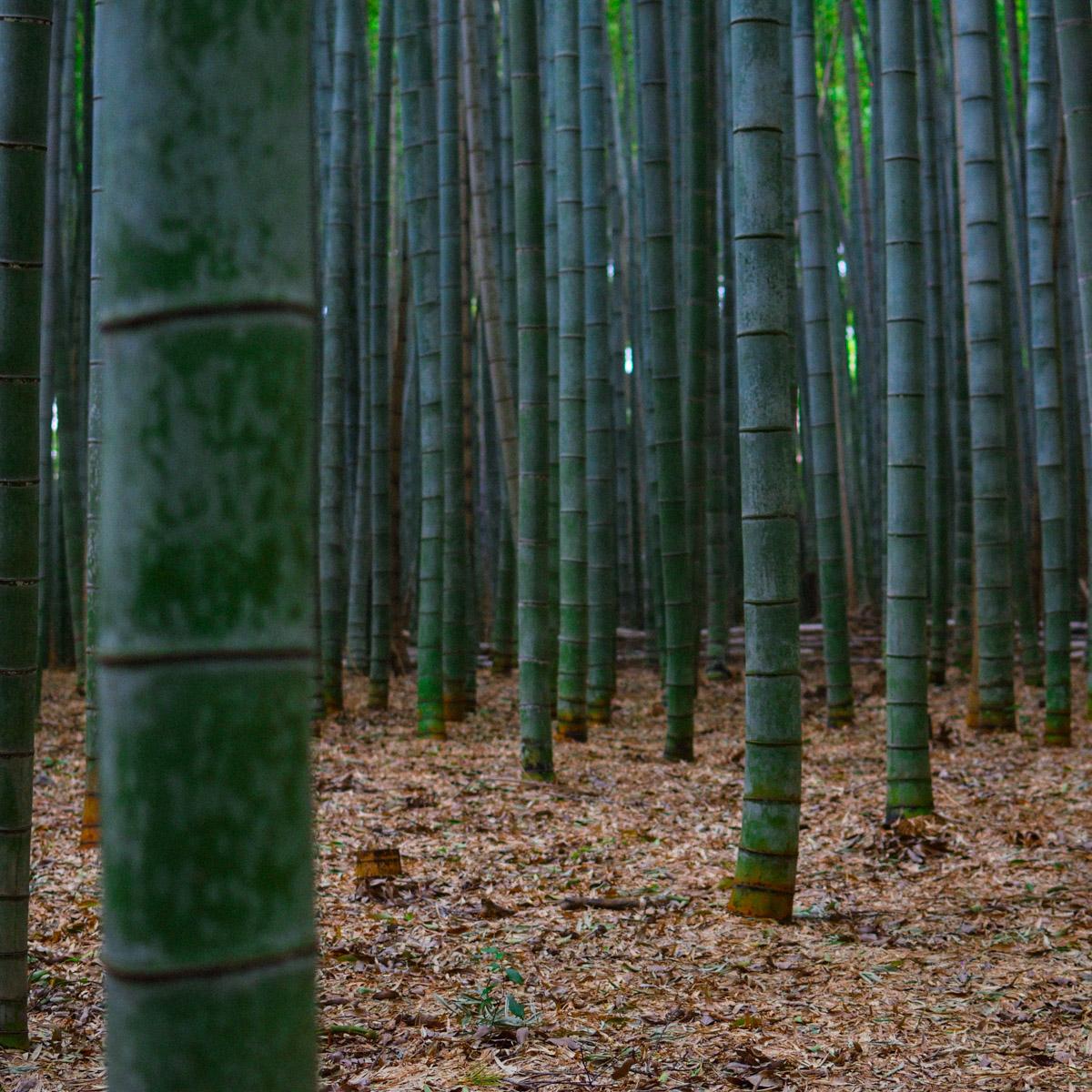 blog_-tadaa-new-garden-box-made-of-bamboo00010.jpg
