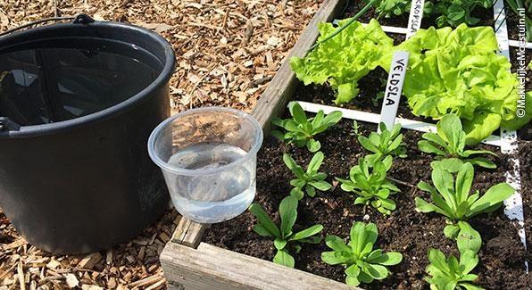 compost-refreshing-soil-water.jpg