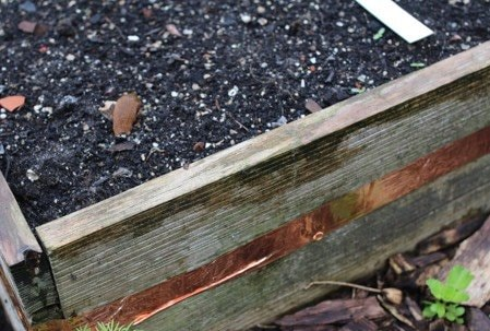 Slugs climbing over the copper and into the planter boxes