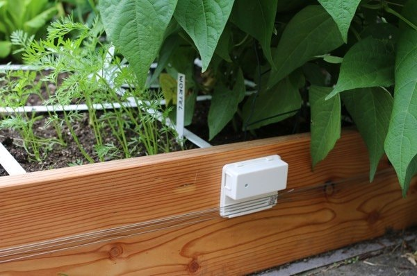 Electric fence for slugs and snails fastened to the planter