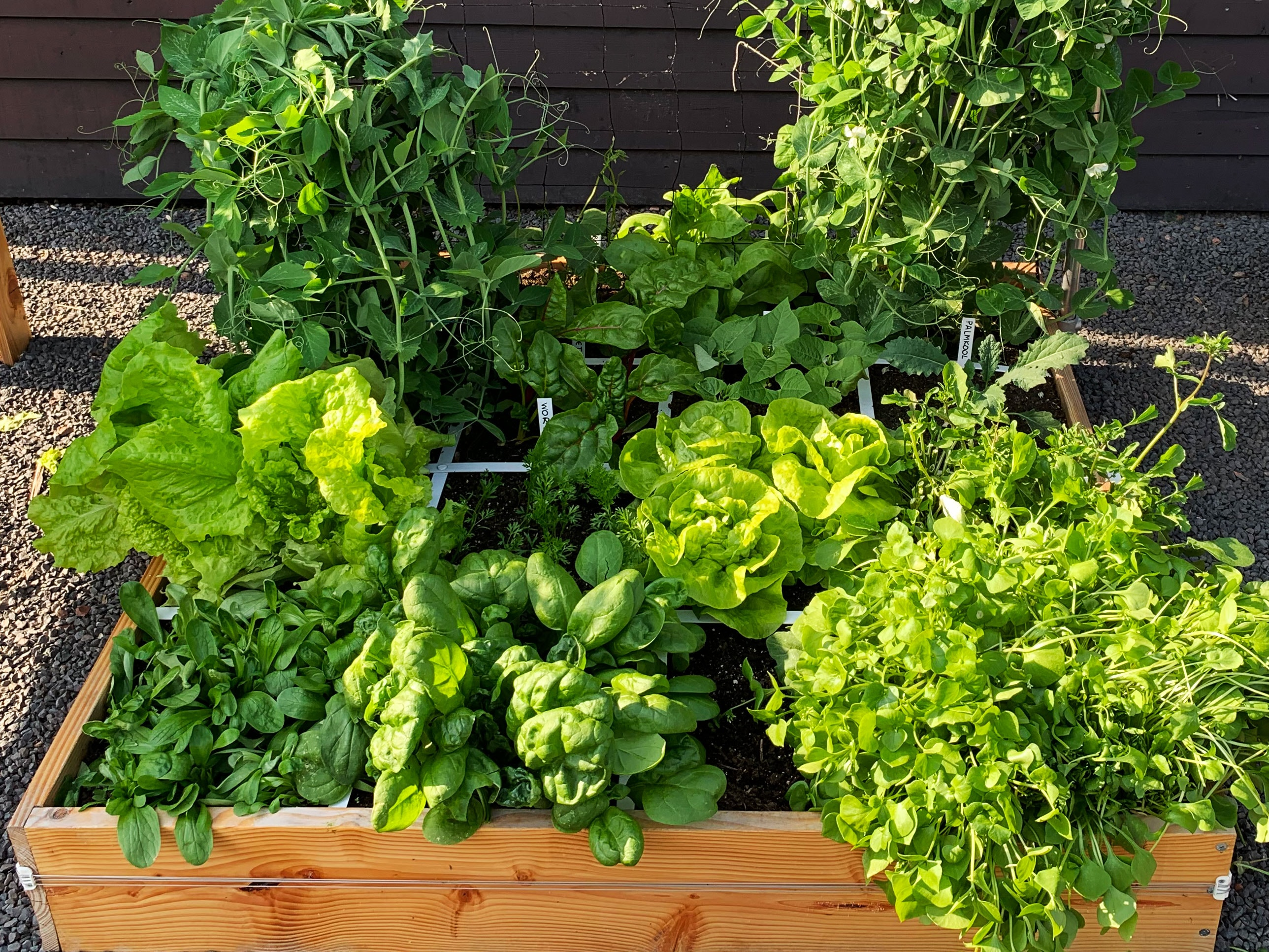 A full planter overflowing with vegetables